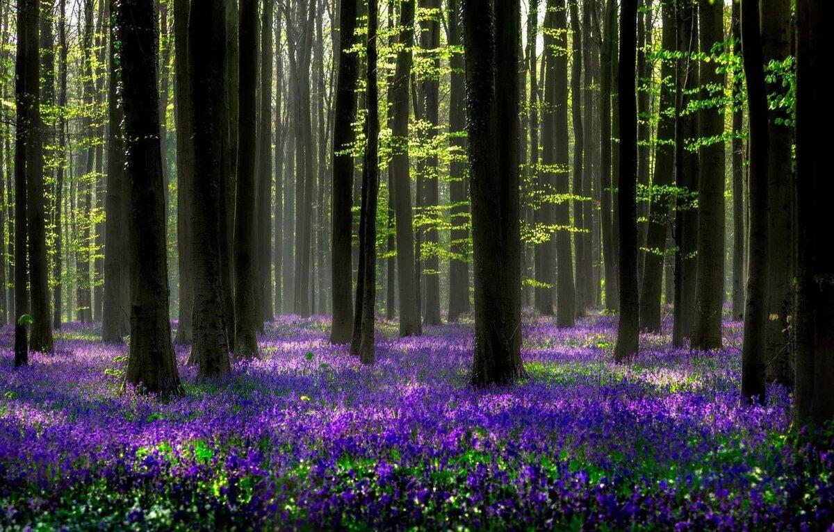 Картинки цветы в лесу