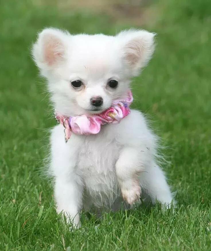 Картинки для маленьких собака