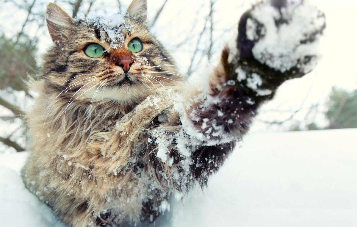 Картинка кот и снег