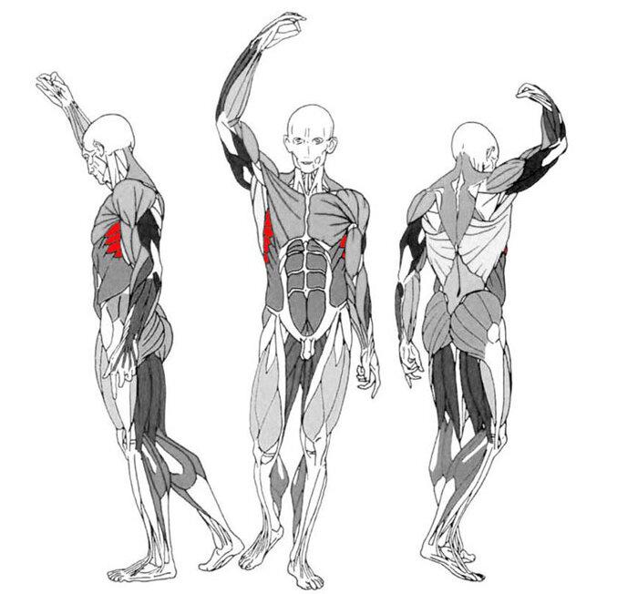 Работа групп мышц в картинках
