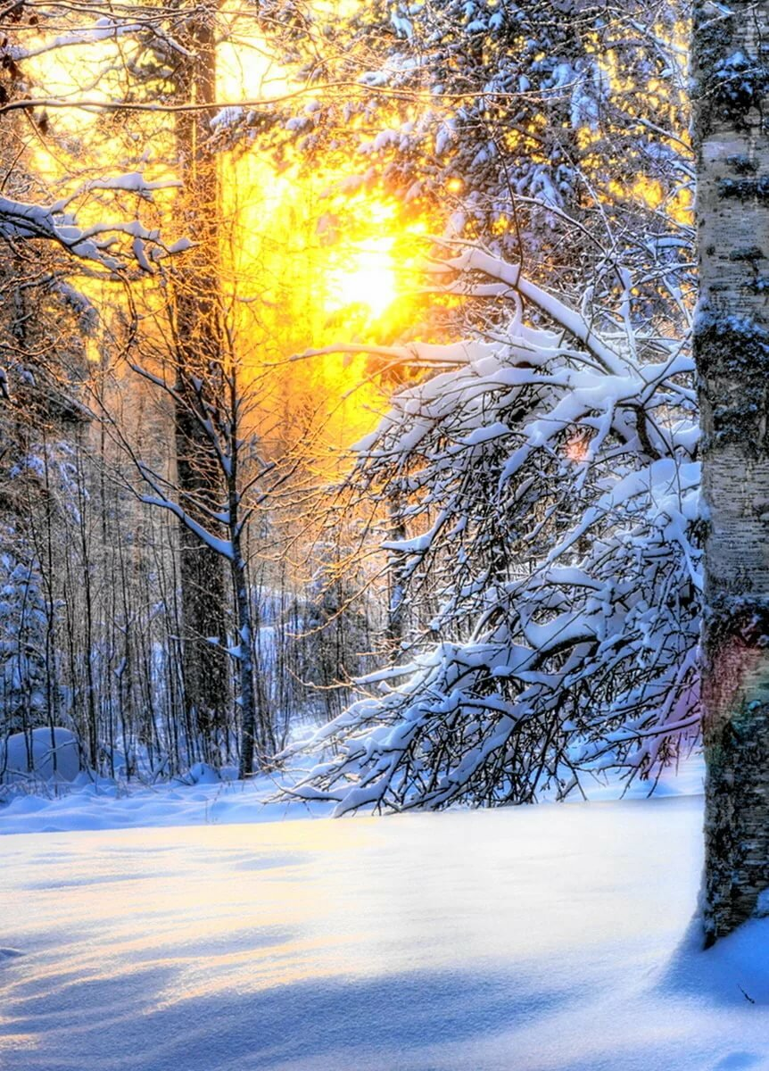 Зима в лесу картинки в телефон
