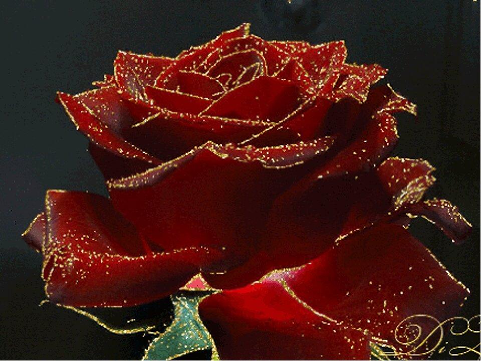 Розы картинки анимационные, картинках приколы одинокая
