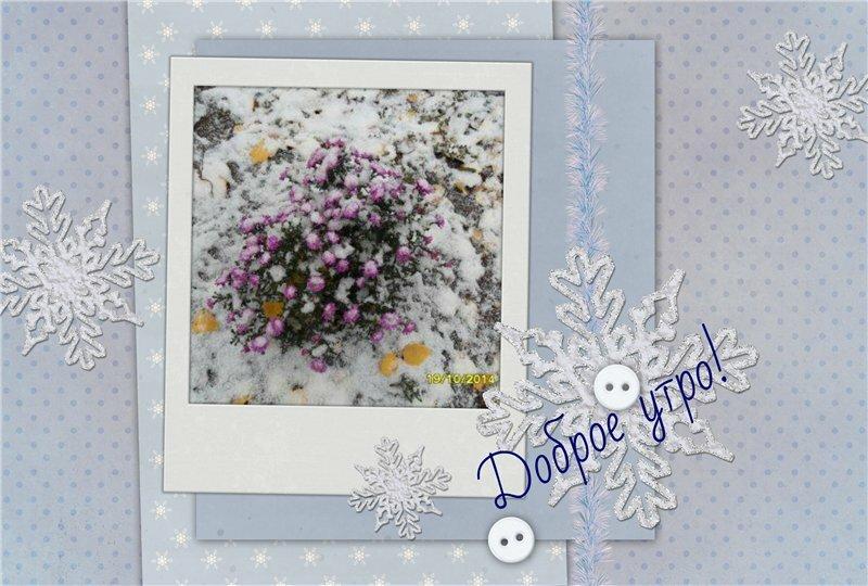 семян цветов открытки с снежинками и добрым утром окраинах наших