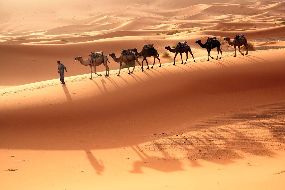 Прикольные картинки пустыни, смешная