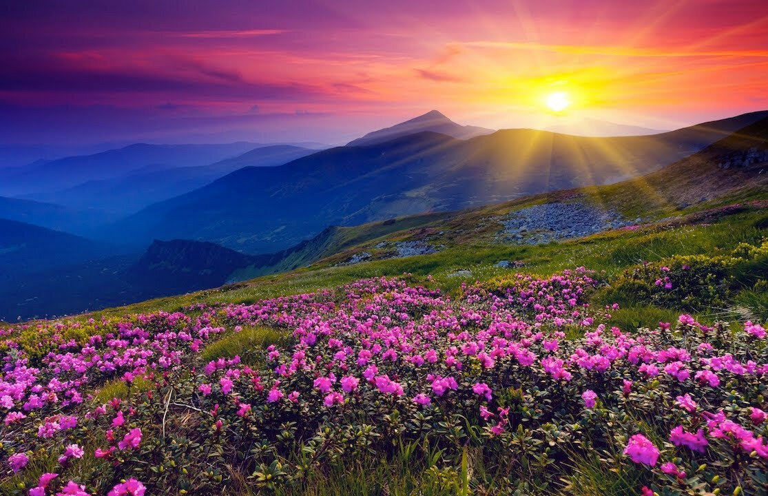 Красивые картинки природы с цветами шикарными, днем