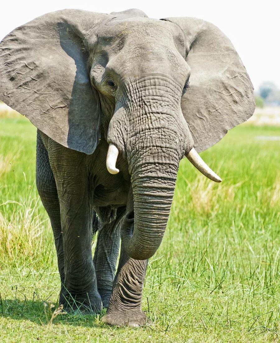 Иллюстрации к стихам саши черного слон