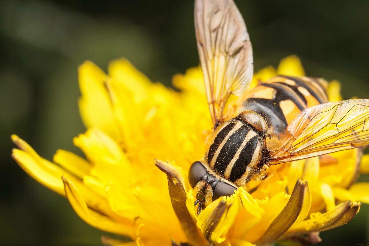 обожаю пчелы и шмели фото картинки спешу опоздать