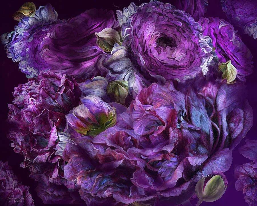 Фиолетовые пионы картинки