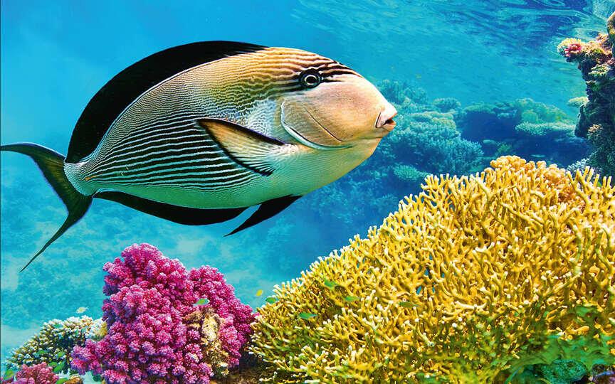 картинки как в реальной жизни выглядит океан с рыбами вам надо