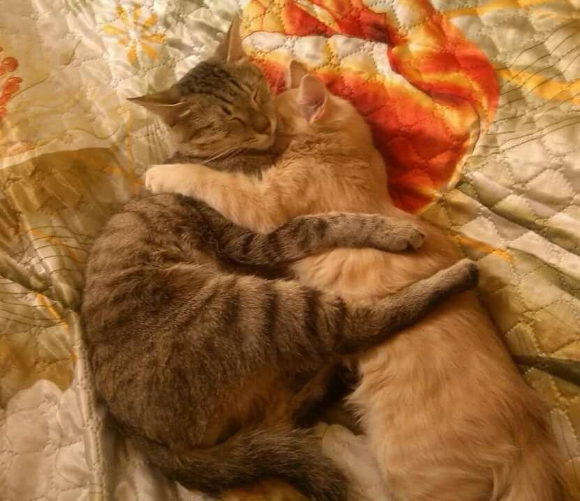 Нарисованная, картинки спокойной ночи с котами в кровати