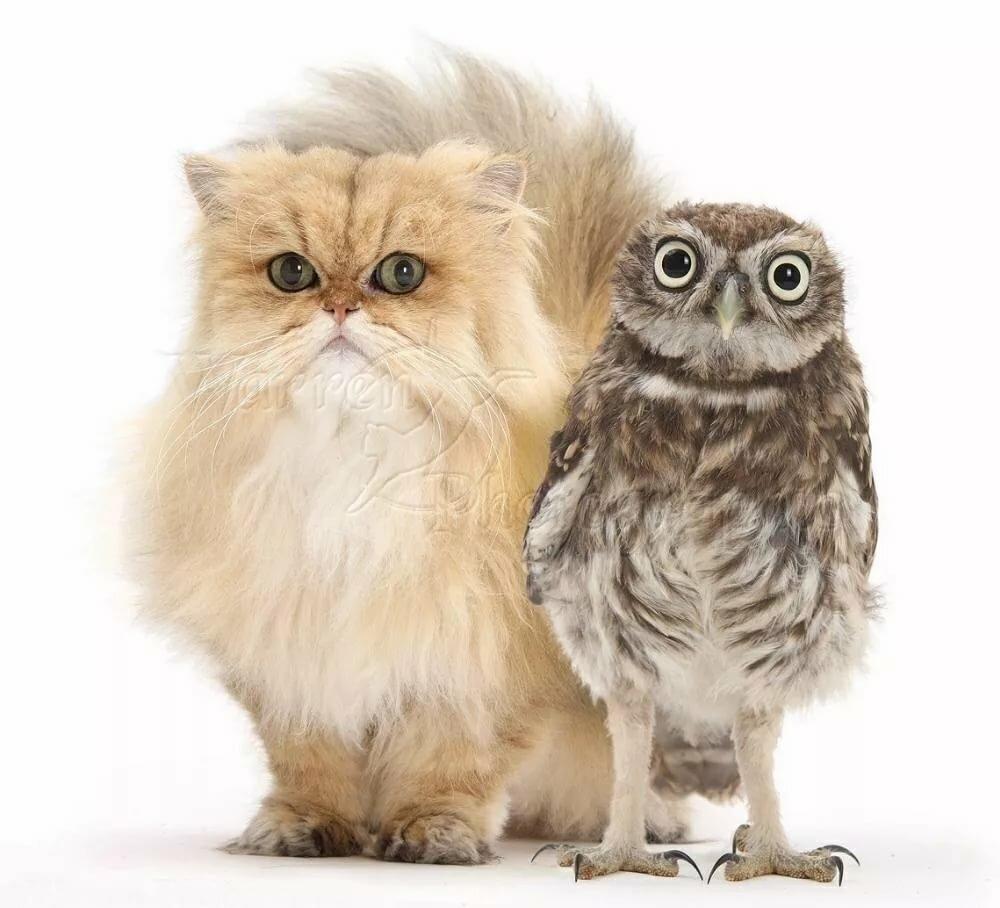 картинки совы и котенка ехать