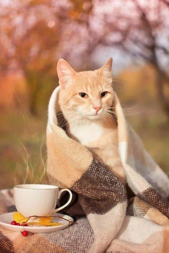 поэтому картинки коты осень утро обозначены специальным ценником