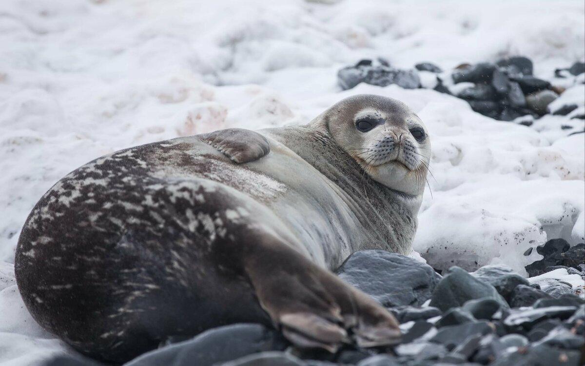 Красивыми брюнетками, картинки с тюленем в соц сетях