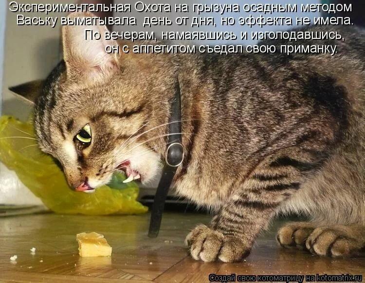 Смешные картинки про кота и мышь