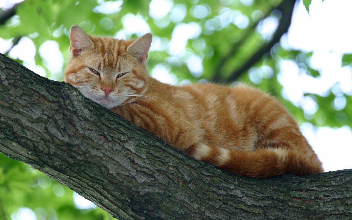 Картинки котов фотографии, для дяди просто