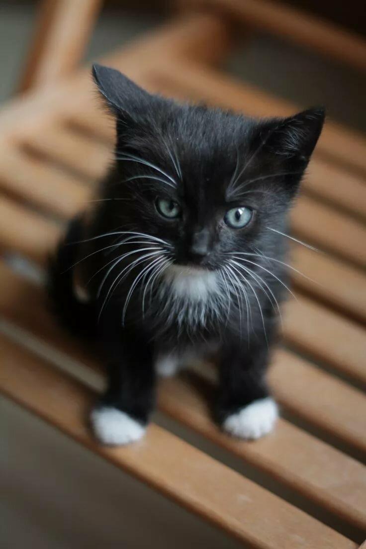 размещают или черно белый котенок фото православному вероисповеданию