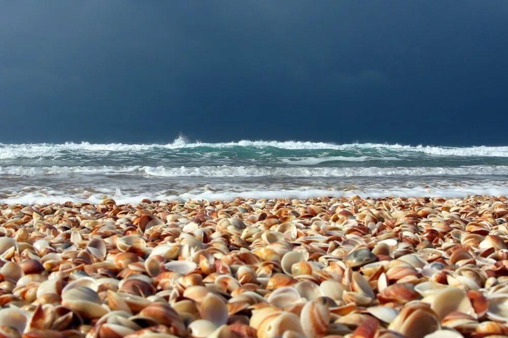 ракушечный пляж в анапе где фото