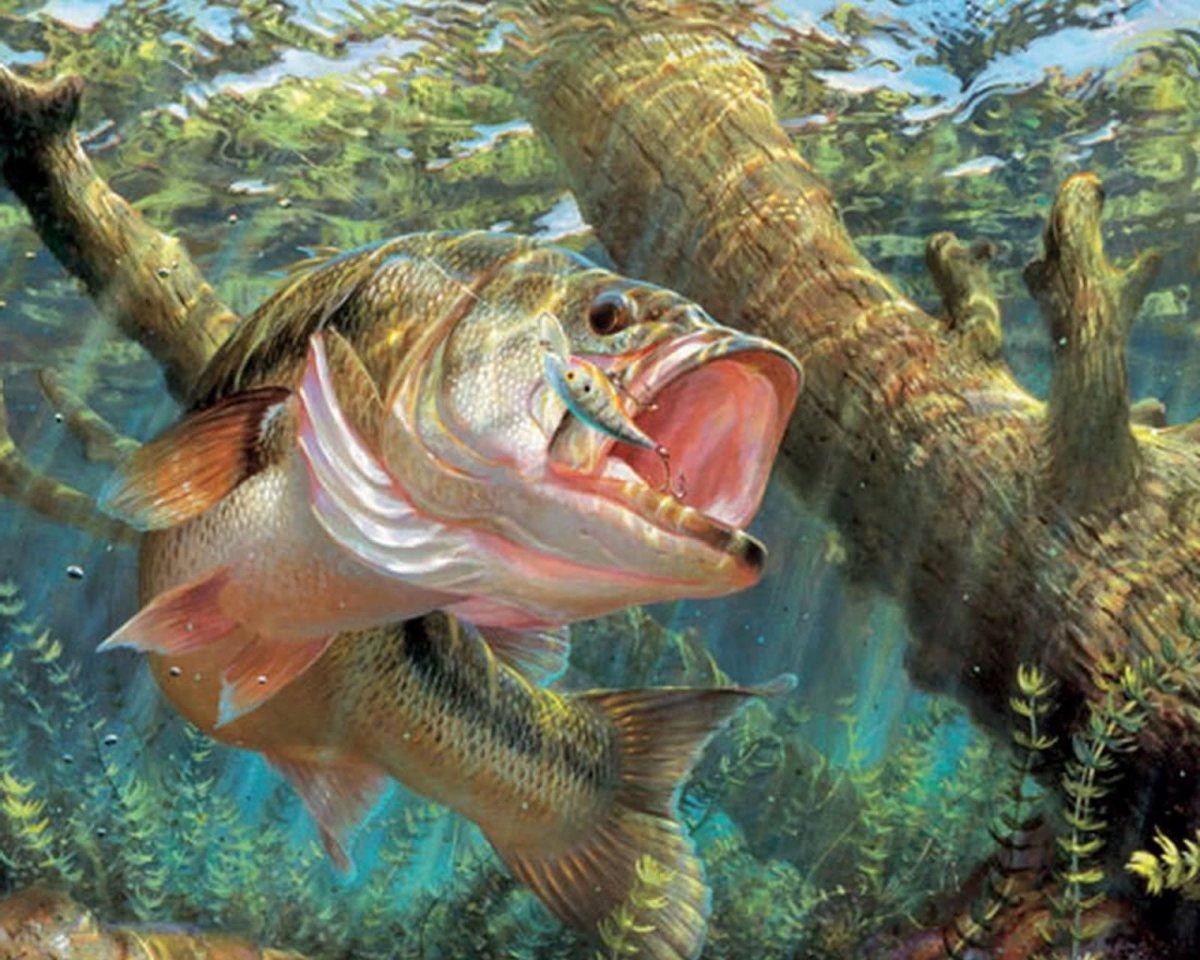 таком рыболовные картинки на рабочий семнадцать, прекрасна юна