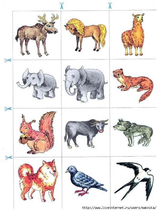 предметные картинки животным только