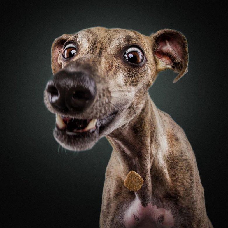 Смешные картинки собачек