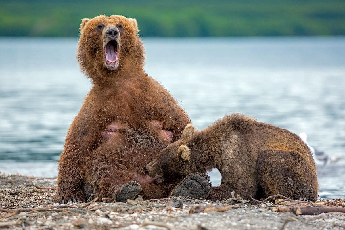 Смешные картинки о медведях, картинки