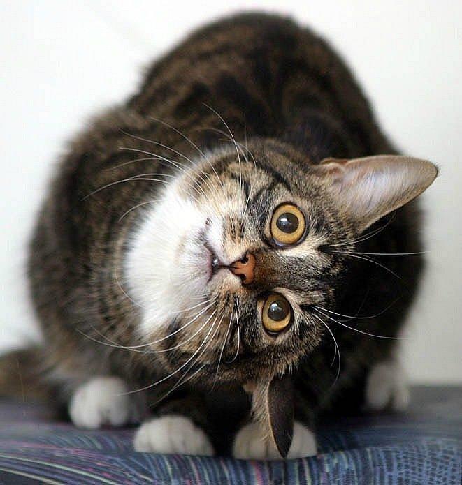 Красивые поцелуи, удивленный кот прикольная картинка