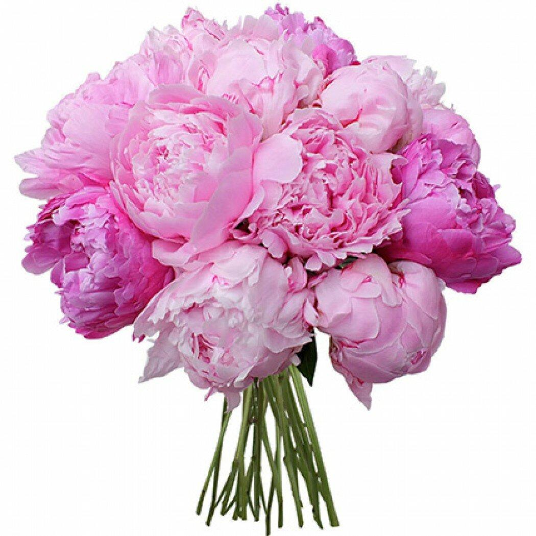 Картинка с розовыми пионами, картинки