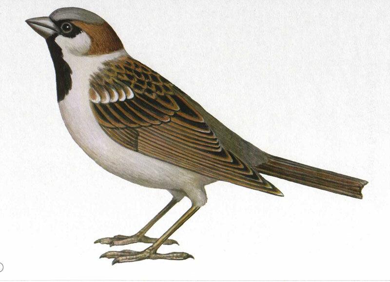 Смотреть картинки птиц для детей