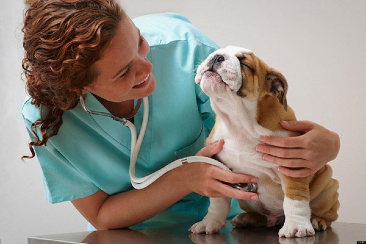 Картинки с больными животными