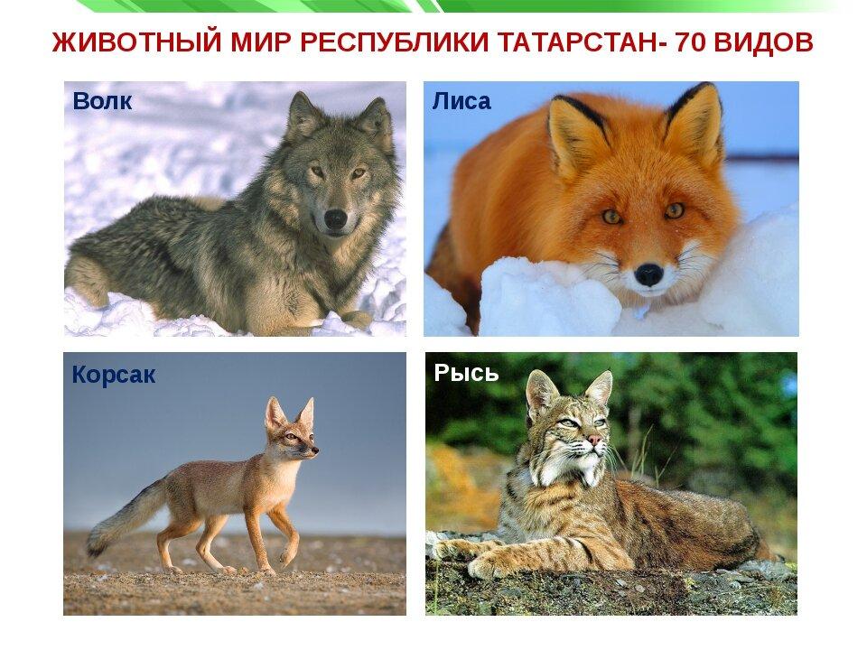 животные с картинками в татарстане мне