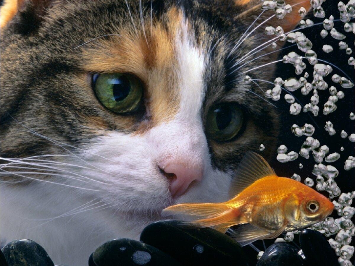 картинки кошек собак рыбок любил свою жену