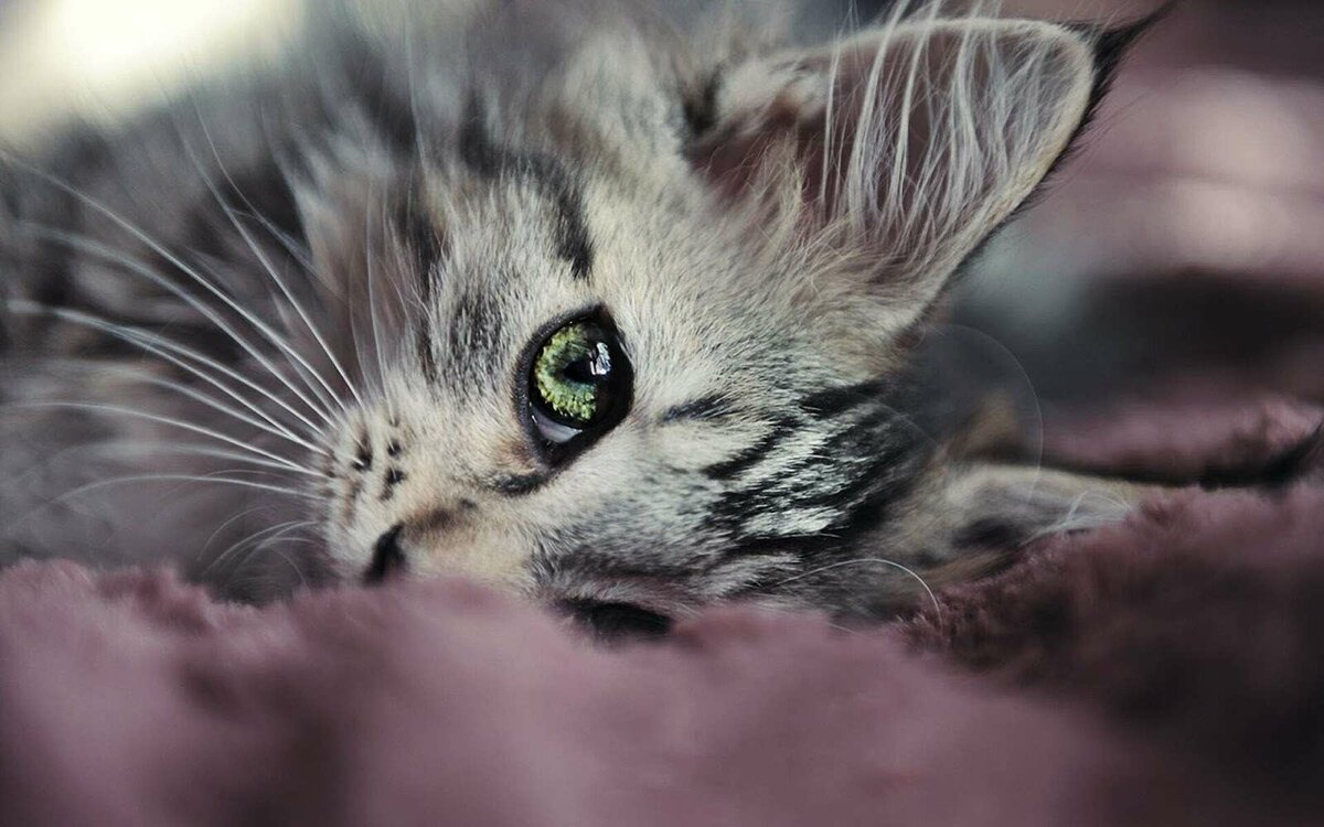 Смешные про, открытки грустный котенок