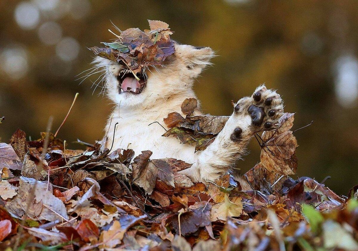 Октябрь картинки прикольные