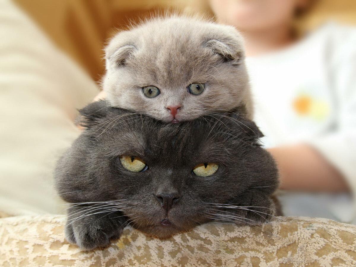 Смешные картинки котят кошек