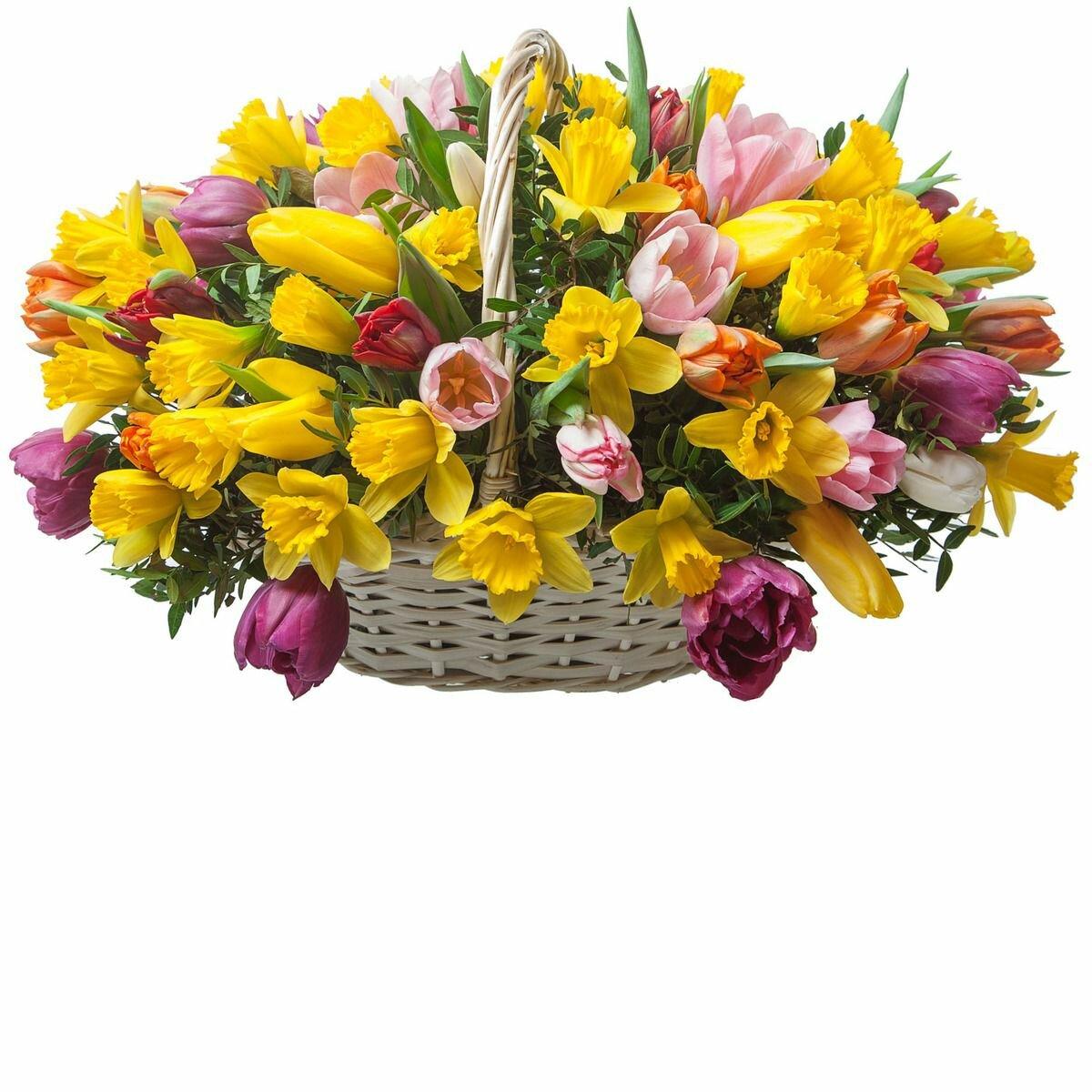 Нарциссы и тюльпаны букет, купить урюпинске авито