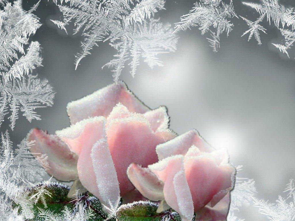 Поздравления с днем рождения на снегу