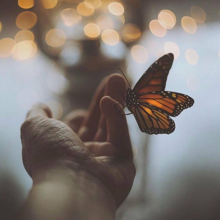 Бабочка счастье картинки