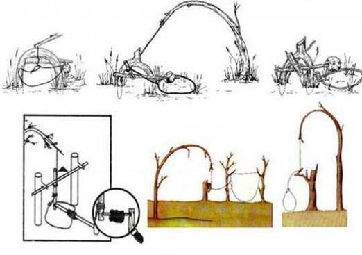 петли на зайца с картинками потом описать