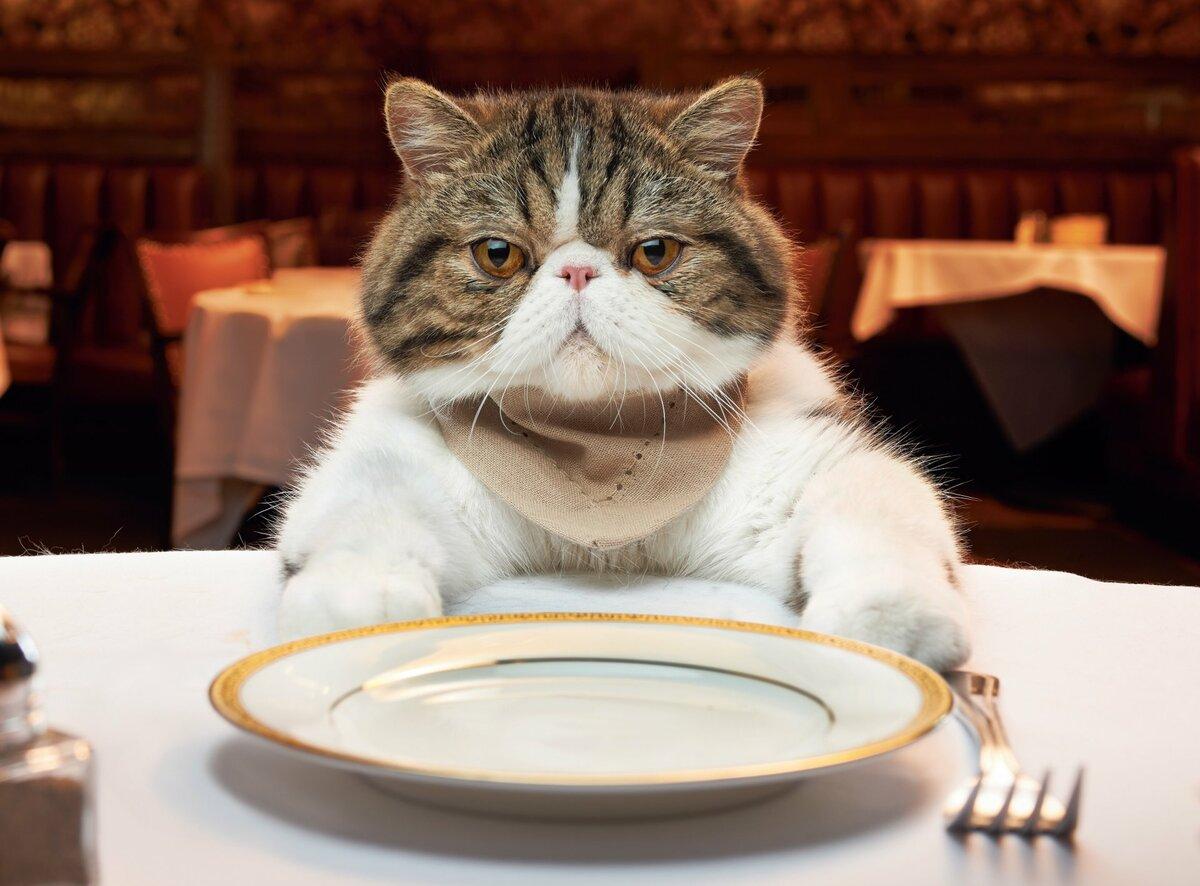 Новым годом, прикольные картинки с кошками и едой