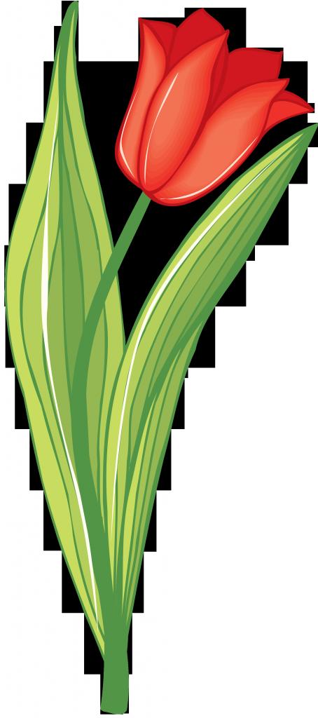 Открытка скрапбукинг, тюльпаны картинки для детей на прозрачном фоне