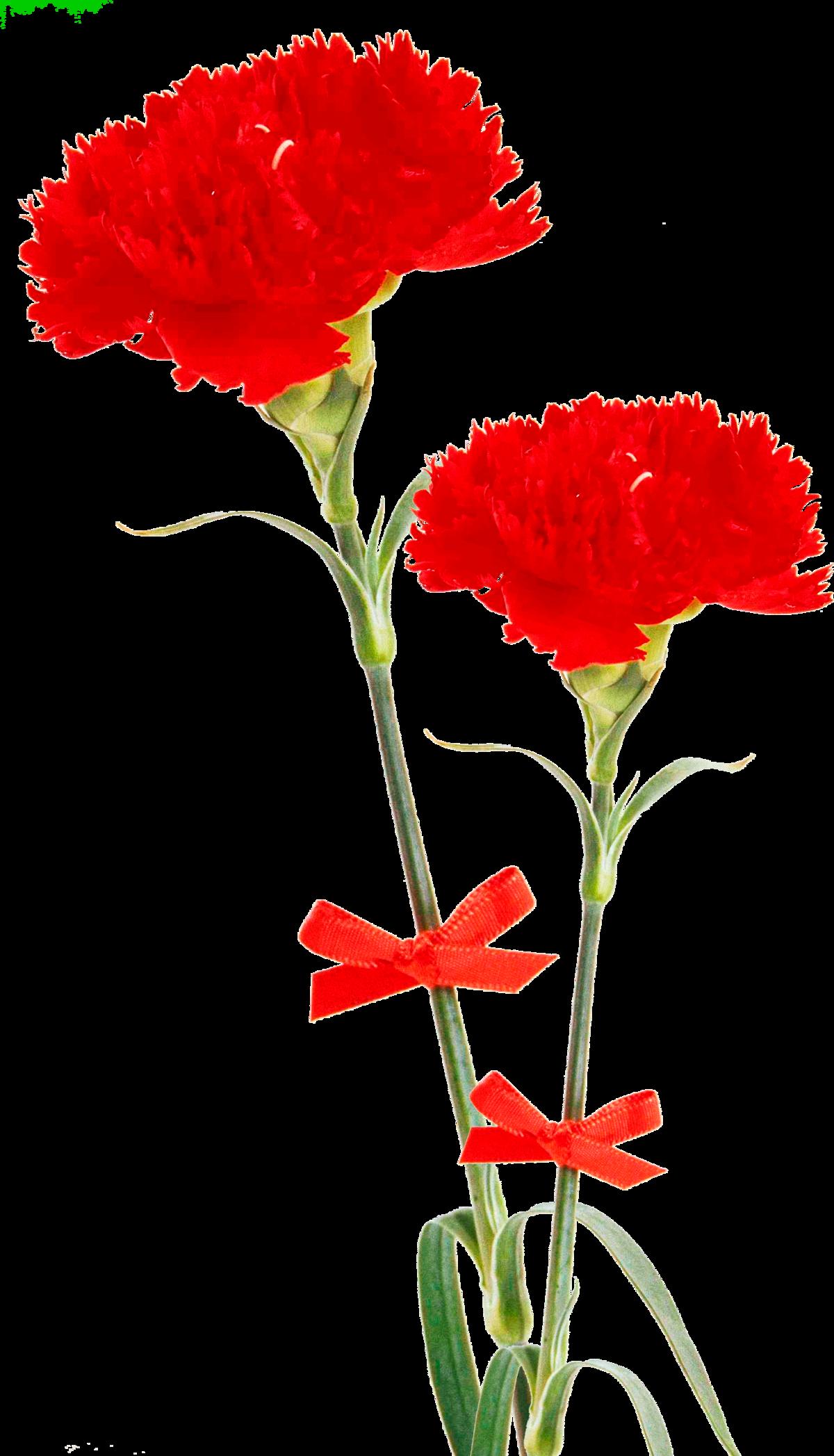Картинки анимация цветы гвоздика, картинки