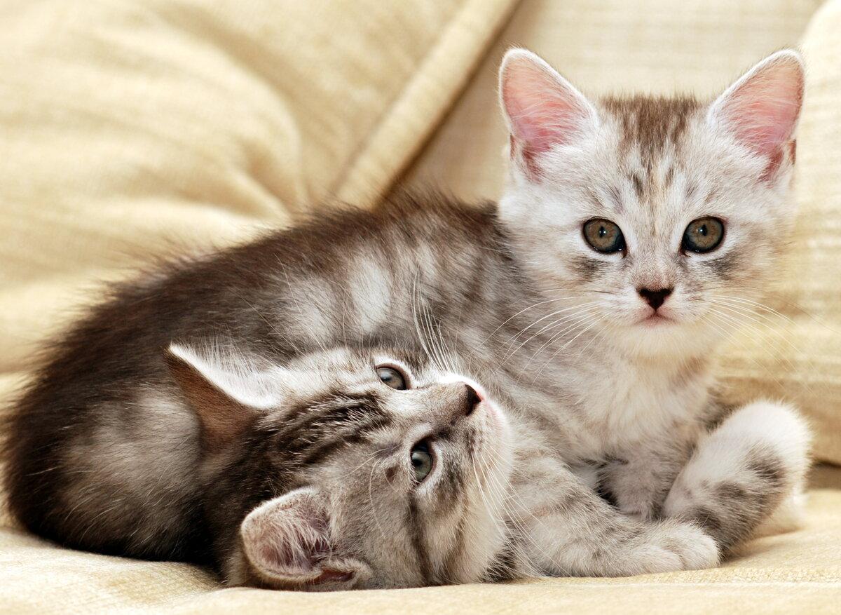 Картинка с кошкой и котятами, популярных