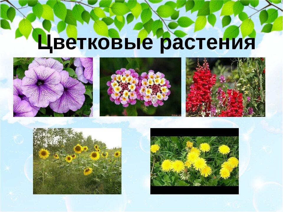 Разные цветы фото и названия для детей презентация