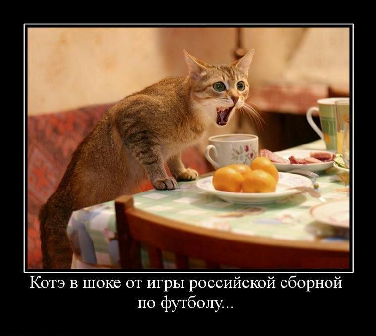 Смешная картинка про кота с чаем, днем