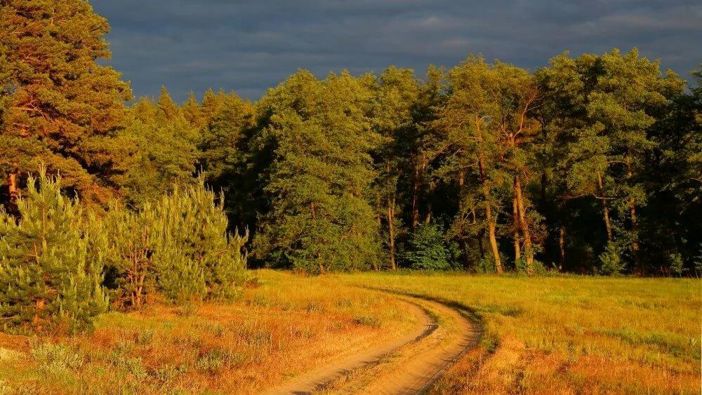 картинка природа курского края желтой гофрированной бумаги