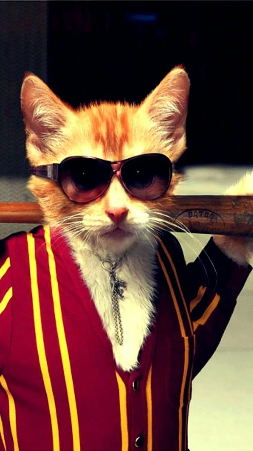фото с котом в очках на стим аву крутые