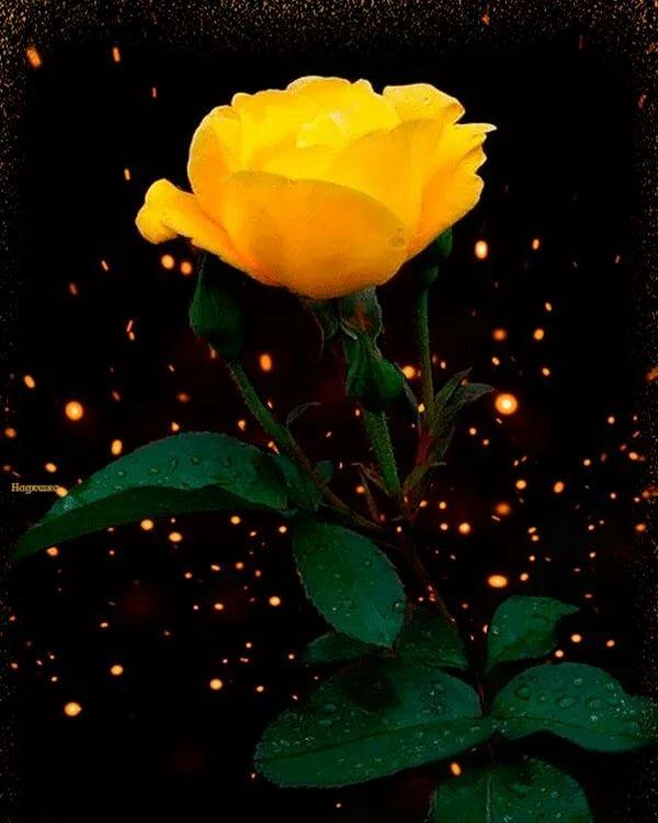 Красивые картинки цветов гифы