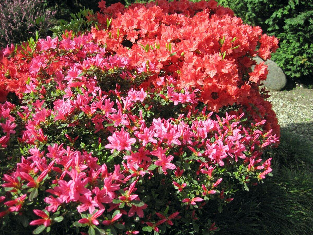 Каталог садовых цветов и кустарников фото названия