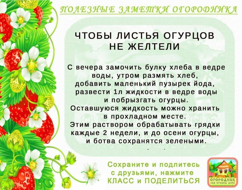 Полезные советы для дачников и огородников картинки