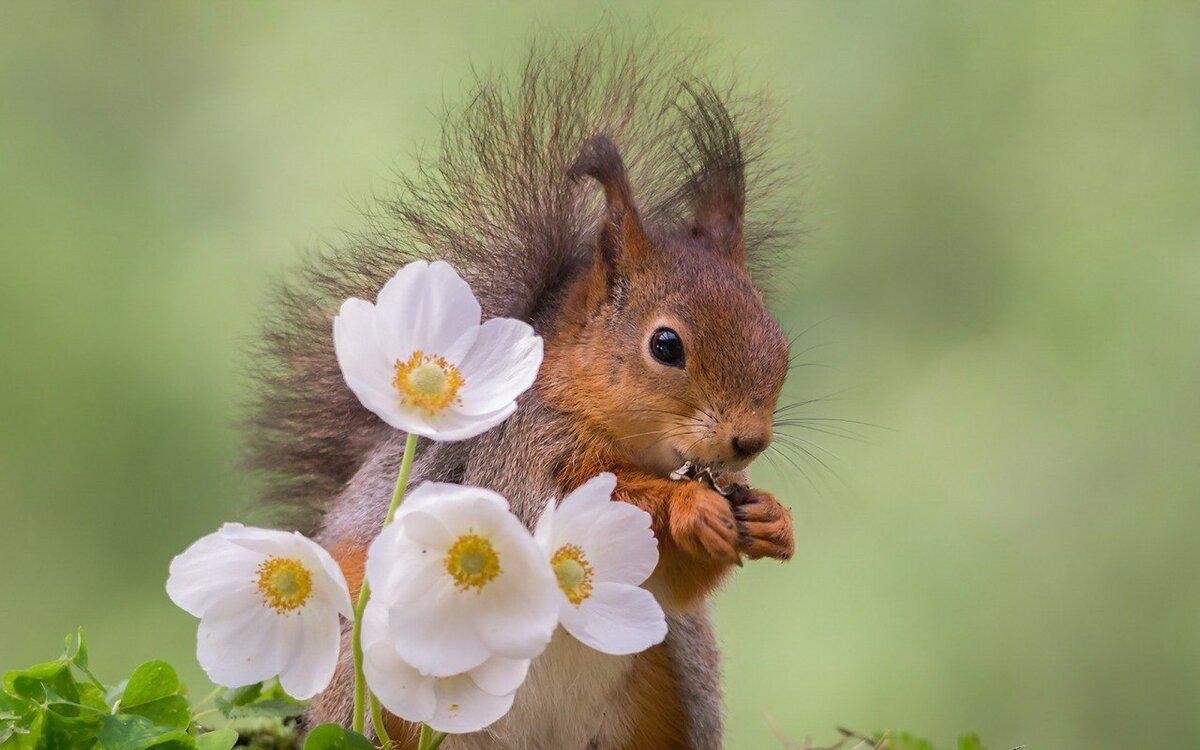 Прикольные открытки с природой